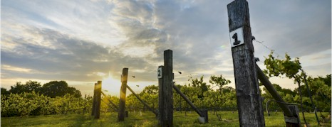 http://allandalewinery.com.au/ - Allandale - Tasting Notes On Australian & New Zealand wines