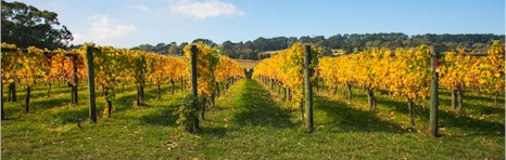 http://www.bellinghamestate.com.au/ - Bellingham - Tasting Notes On Australian & New Zealand wines
