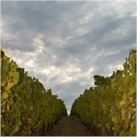 http://www.kreglingerwineestates.com/ - Kreglinger - Tasting Notes On Australian & New Zealand wines