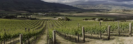 http://www.prophetsrock.co.nz/ - Prophets Rock - Tasting Notes On Australian & New Zealand wines