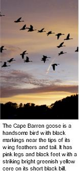 http://www.capebarrenwines.com/ - Cape Barren - Tasting Notes On Australian & New Zealand wines