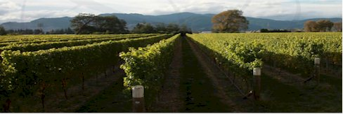 http://www.craggyrange.com/ - Craggy Range - Tasting Notes On Australian & New Zealand wines