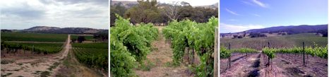 http://www.massoniwines.com/ - Massoni - Tasting Notes On Australian & New Zealand wines